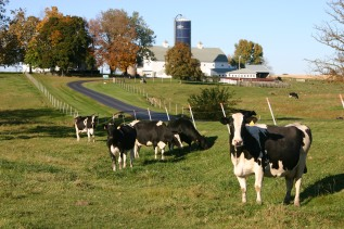 plateville-dairy1