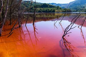 polluted-lake