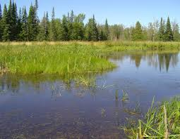 wetlands